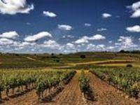Viñedos Vinyard winery bodega