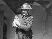 All kind of wartime felines... Favorite mascots, pets, rescued animals, zoo inhabitants, in propaganda, advertising, patches, nose art, postcards, toys, etc.
