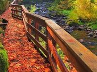 All about beautiful Fall!