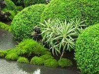 GARDEN - The Art of Landscape Gardening