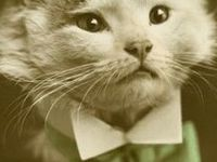 Vintage and Retro Cat Photos and Illustrations