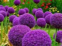 """Flower is my nickname! """"I must have flowers, always, and always."""" Claude Monet"""