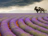 Fields / Farms / Countryside