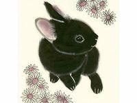 Conejo - conill - bunny