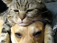 dog food, dog care, cat food, cat care