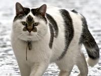 White Kitten With Black Spot On Head