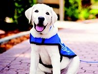21 Best Super Cute Guide Dogs Images On Pinterest Guide