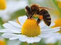 thema kriebelbeestjes / bugs