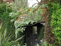 Gardening ideas for small spaces, inner city yards, vegetables, flowers, trees.