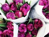 ✿ܓ Flores ჱܓ
