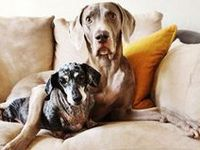 - lovely, beautiful, cute, silly dogs.