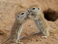 Cute Adorable Snuggly Lovable Animals. / Cute animal pictures.