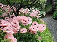 gardening / favorite plants