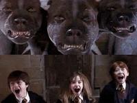 Entertainment...Harry Potter