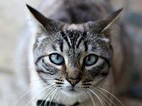 Los gatitos los amo son todos hermosos y muy compañeros en especial los mios