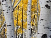 Art/Trees