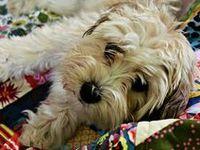 Pets love quilts :)