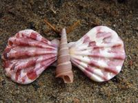 1000 images about stunning seashells on pinterest shell for Animals made out of seashells