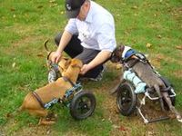 We can't have a Pinterest without a board for the wonderful animals who work at Eddie's Wheels