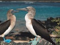 The Galápagos Islands are an archipelago of volcanic islands distributed on either side of the Equator in the Pacific Ocean, 926 km west of continental Ecuador, of which they are a part.