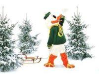Ducks fever