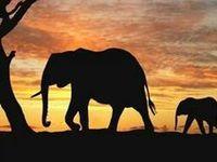 0 Elephants