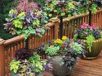 ~Container Garden~