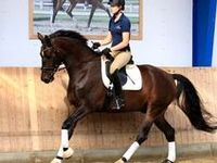 Equine care & management