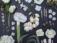Flower Design- botanical, photo