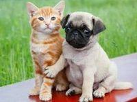 Pet talk, Pet clothes, accessories, more!!