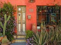Planties.  Cactus suculentas.. espacios verdes interiores y exteriores