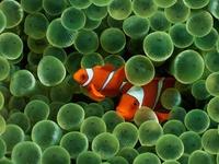 marine & fish