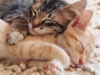 Cats (Big & Small)