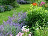 Landscape Backyard, Sideyard & Garden