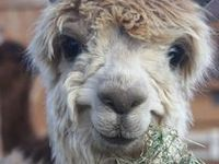 49 Best Images About Llama Llama Duck On Pinterest Baby
