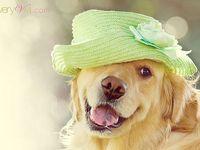Millinery, Flowers, Scarves, Turbans, Wraps, Hats, Cloches, Caps, Veils, Fascinators, Bonnets, Berets, Hair Nets, Headpieces, Headdresses, Pillbox...