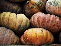 autumness & pumpkins!