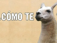 Education - Spanish!