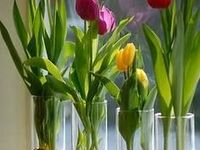 Hogar: jardinería