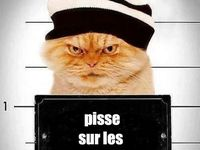 Humour&gags