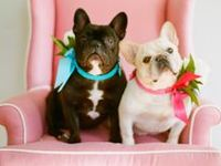 More and more couples are including their loving pets as part of their big day. Found some very cute images that are sure to make you smile