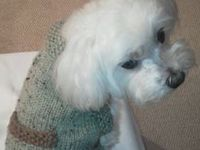 Maltese Dog Knitting Pattern : FREE KNIT & CROCHET DOG SWEATERS FOR ZAK on Pinterest Dog Sweaters, Dog...