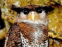 Amazing wildlife -  Owls