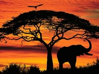If lions are kings then what are elephants?