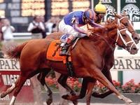Famous Race Horse,, Movie Horses ..Mavericks..Rodeo Horses, Special Horses, A Horse is a Horse Of Course ...
