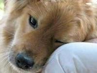 Animal Love & Awareness ...Love and Animal Protection