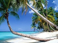 Images and pictures from tropical latitudes includes sandy shores, beaches, tropical islands from around the world - #beach #island #tropical #tropic