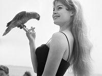 Actress : Brigitte Bardot