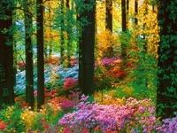 Flowers/ Gardening