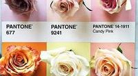Pantone / Colores Pantone Pantone colours